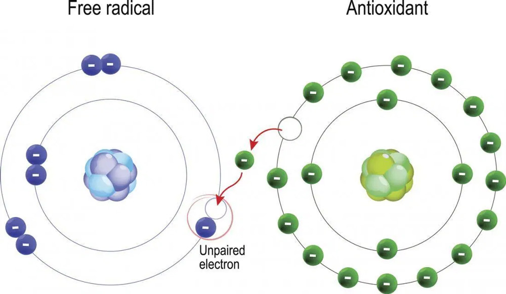 Free-radicals and Antioxidants